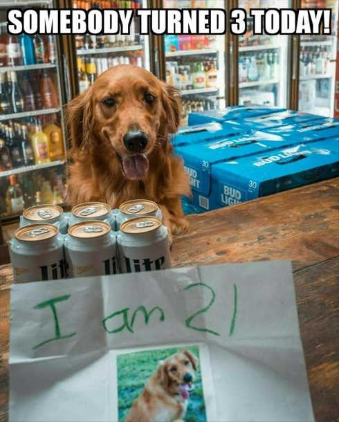 somebody-turned-21-today-dog-retriever-buying-beer