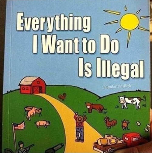 everything i want to do is illegal childrens book