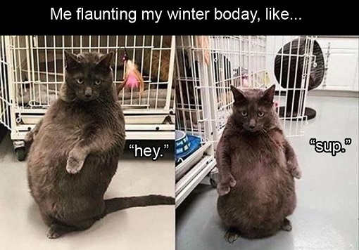 me flaunting my winter body fat cat whats up