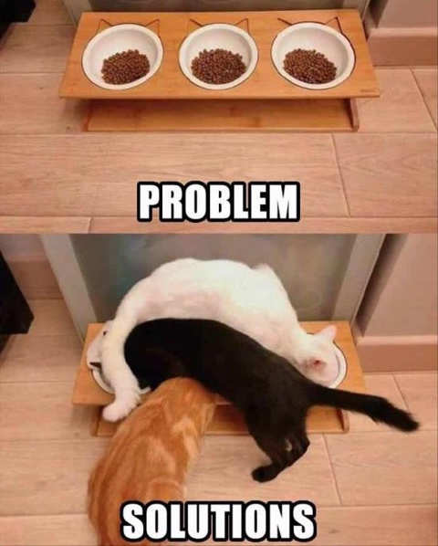 cats eating 3 bowls problem solved