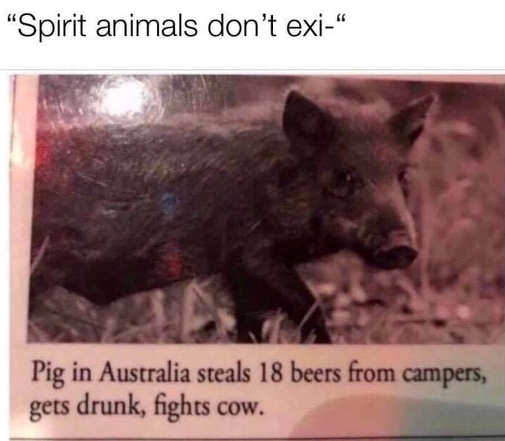 spirit animals dont exist pig steals beers gets drunk fights cow