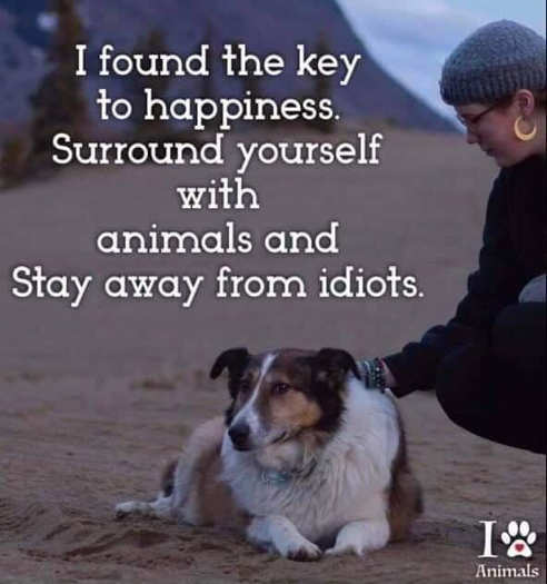 found key to happiness surround with animals stay away from idiots
