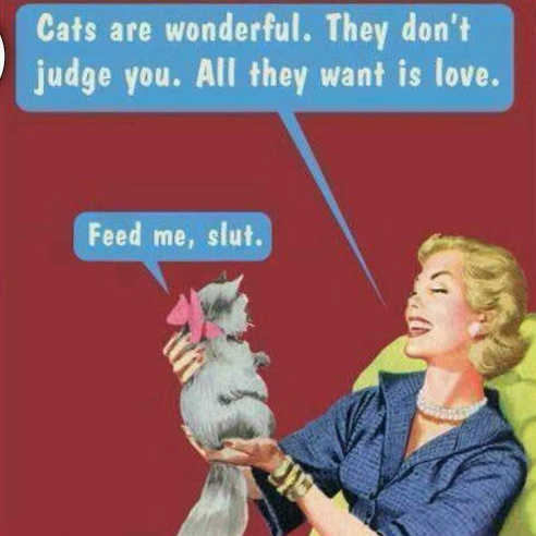 cats are wonderful dont judge you feed me slut