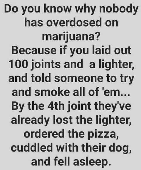 why no one has overdosed on marijuana lost lighter ordered pizza fell asleep