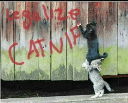 legalize catnip cats spray painting fence
