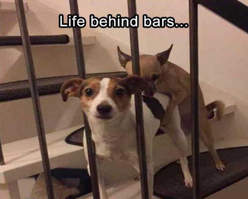 life behind bars dogs doggy style