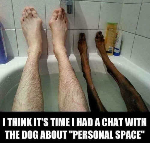 think its time had chat with dog about personal space dog legs in tub