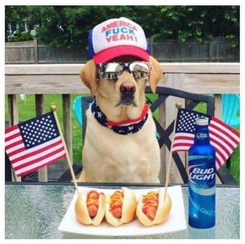 dog flags bud light america fuck yeah hat