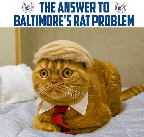 answer to baltimores rat problem cat trump hair