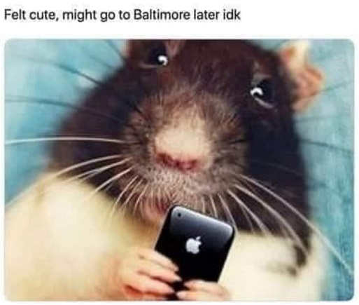 rat felt cute might go to baltimore later idk