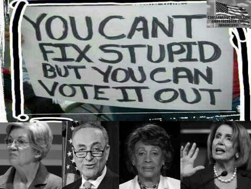 cant fix stupid but can vote it out pelosi watters schumer warren
