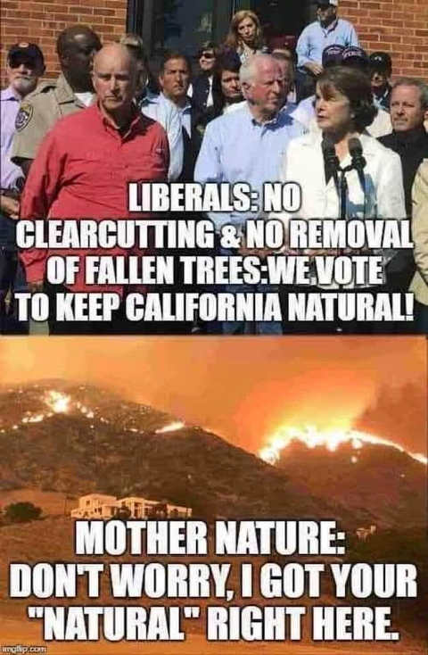 california liberals no clearcutting removal fallen tree natural mother nature fires