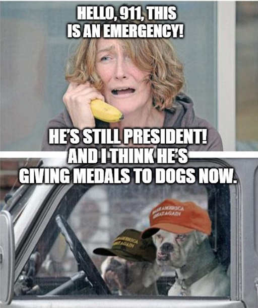 hello 911 trump is still president and giving medals to dogs now tds