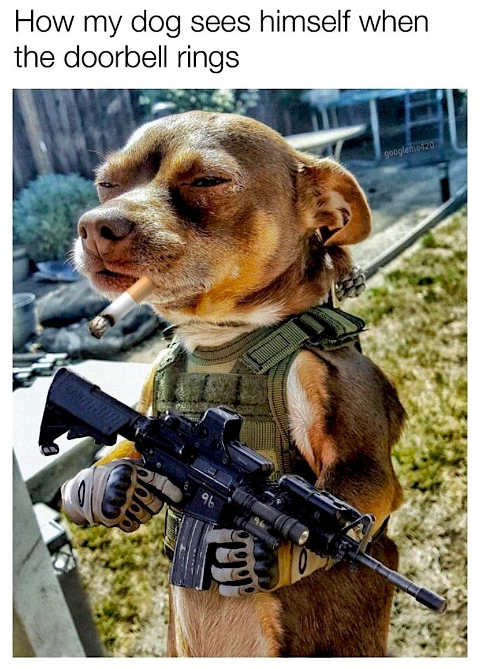 how my dog sees himself when doorbell rings machine gun cigarette