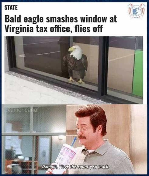 bald eagle smashes virginia tax office flies off