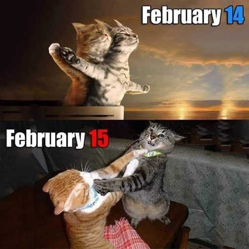 cats february 14 titanic 15 fighting