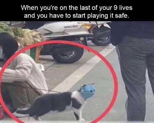 when on last of 9 lives play it safe cat mask coronavirus