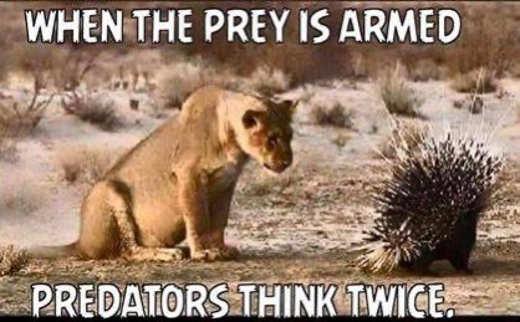 when the prey is armed predators think twice