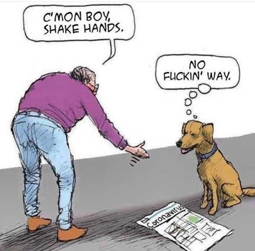 cmon boy shake hands no fucking way dog