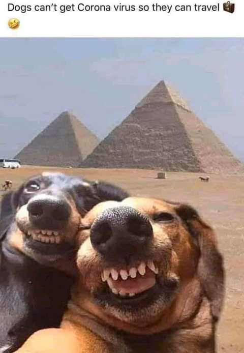 dogs cant get corona virus travel selfie pyramids