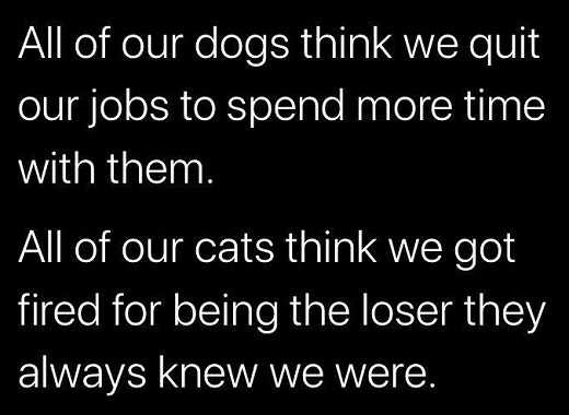 dogs thought quit job spend more time with them cats fired loser they knew we were