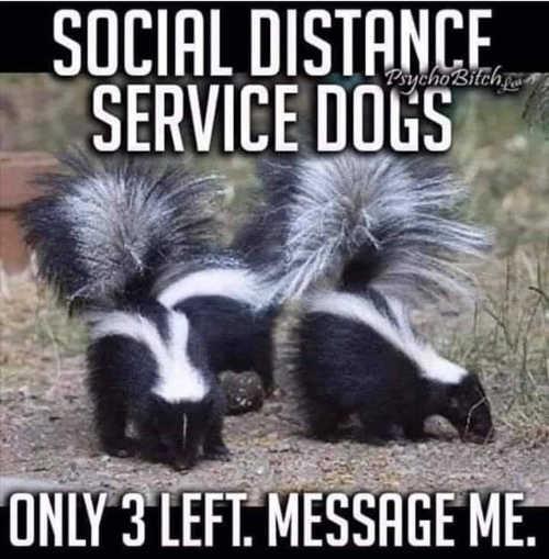 social distance service dogs skunks
