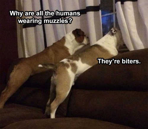 dogs why are all humans wearing muzzels theyre biters