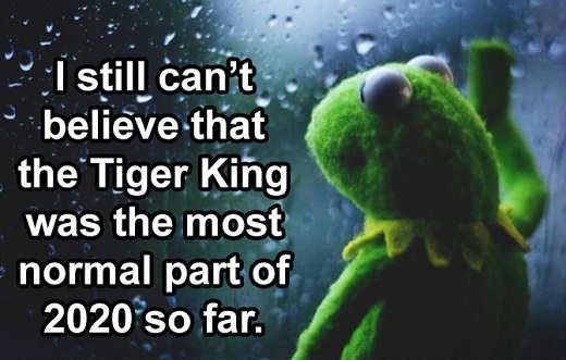 kermit still cant believe tiger king most normal part of 2020