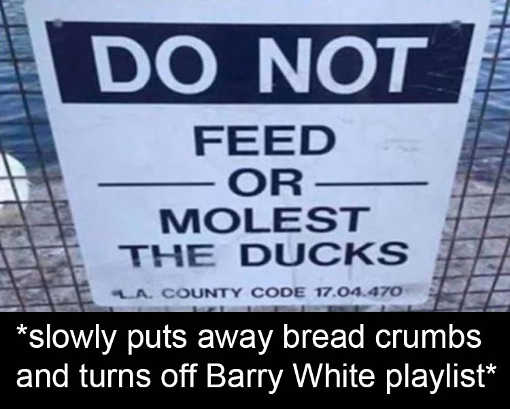 dont feed or molest ducks puts away bread barry white playlist
