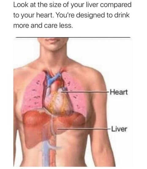 size of heart compared to liver designed to drink more care less