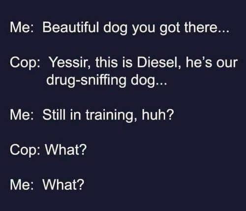beautiful drug sniffing dog diesel still in training cop what