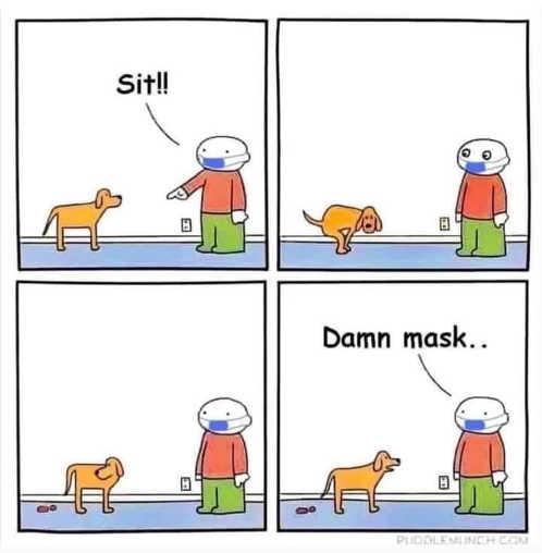 dog sit shits damn mask