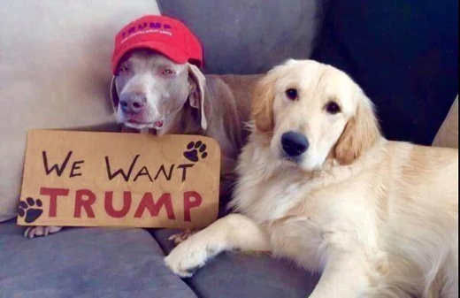 dogs we want trump sign 2020