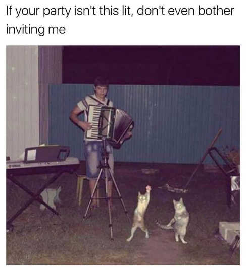 if you party isnt this lit dont even bother inviting me cats dancing accordian