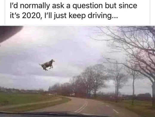 normally ask question since its 2020 just keep driving cow flying