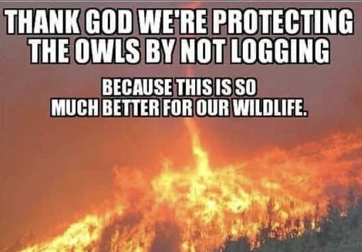 wild fires climate change thankfully protecting owls stop logging so much better for wildlife