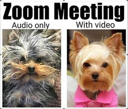 zoom meeting audio only with video dog