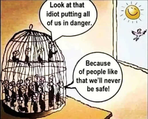 birds in cage look idiot putting our lives in danger never be safe like us in prison
