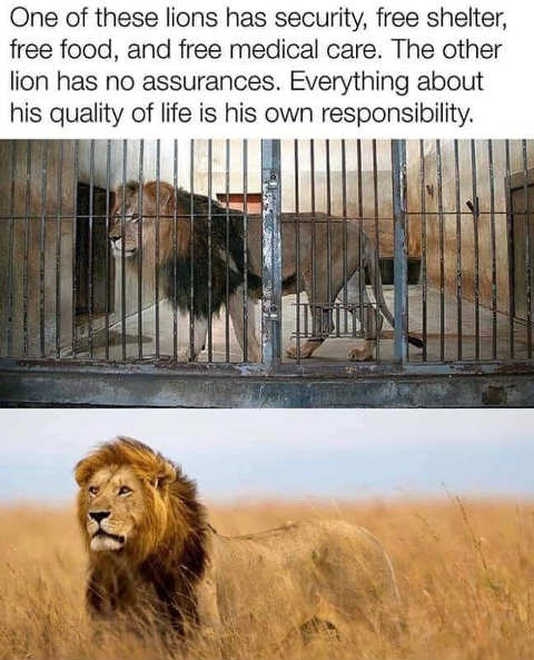message one lion free food security other free will
