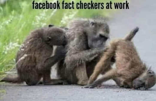 monkeys head up ass facebook fact checkers at work