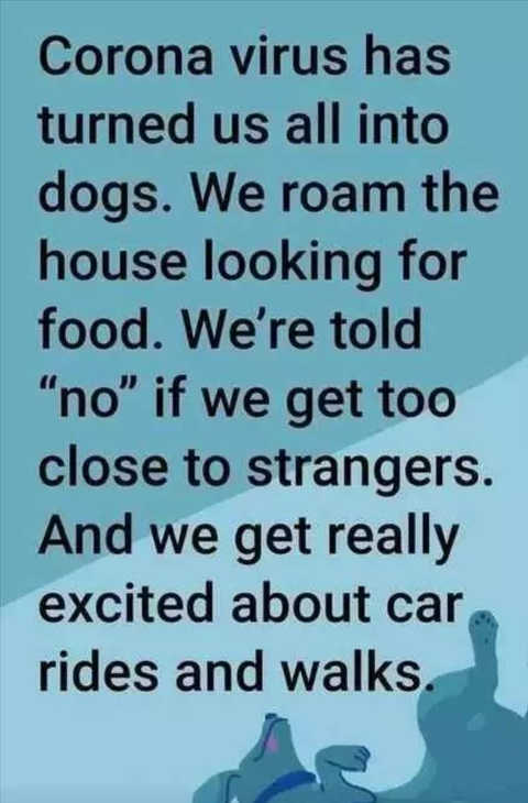 coronavirus turned us into dogs roam house looking for food get excited about rides and walks