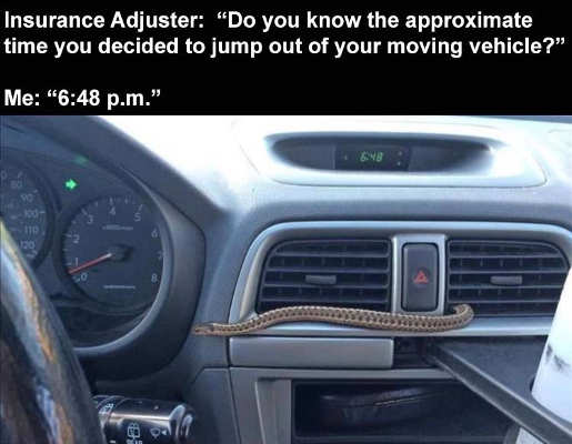car insurance adjuster time jumped from moving vehicle snake