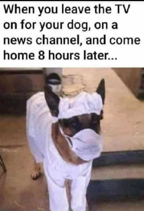 when you leave tv on for dog news channel mask surgical outfit