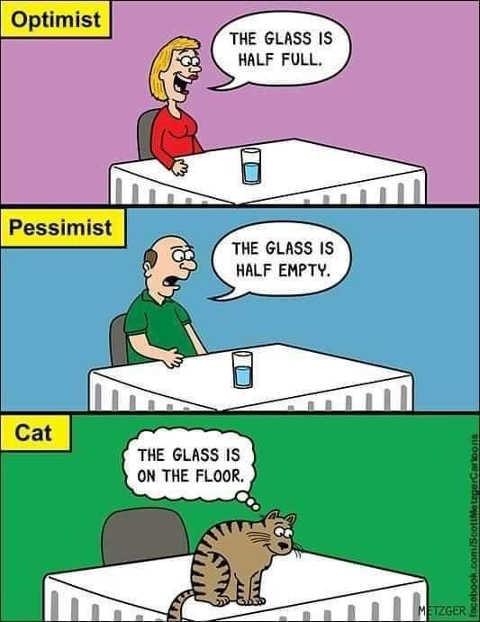 optimist pessimist cat glass half empty full on floor