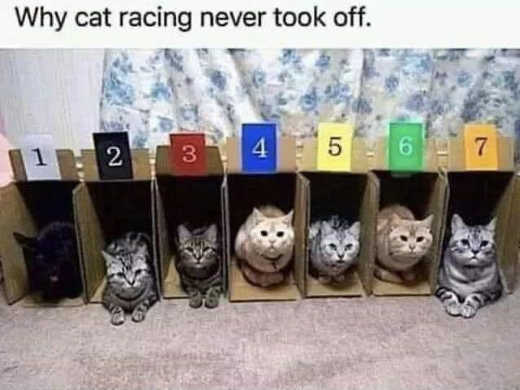 why cat racing never took off remain in boxes open