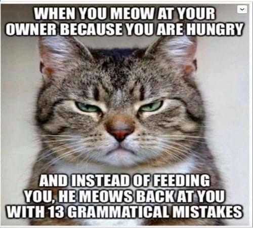 cat when you meow at owner meows back grammatical mistakes