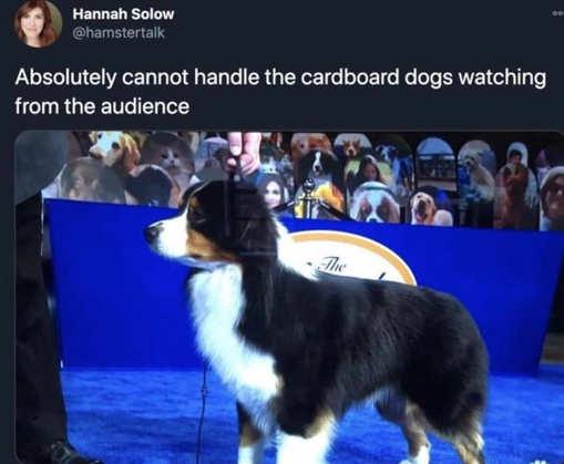 tweet cant handle dog cardboard audience