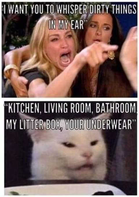 angry lady cat smudge whisper dirty things litter box kitchen underwear