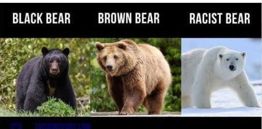 black brown polar racist bear