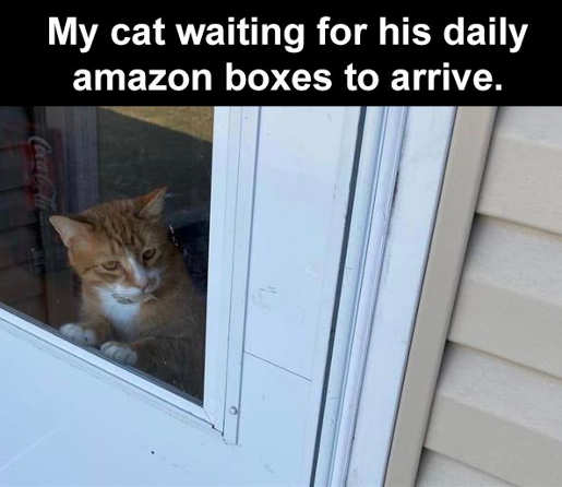 cat waiting for daily amazon boxes